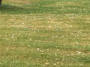 Golf ball size hail