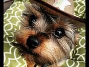 Doggon Sheriff