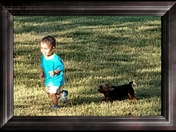 Miniature Yorkie playing chase