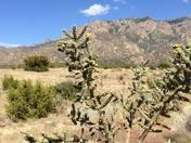 Albuquerque's Treasure