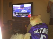 Ravens Sophie watching her favorite player