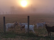 Fw: Foggy morning sunrise from Possum Kingdom SC