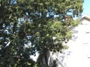 Tree Trimming (UNCLASSIFIED)
