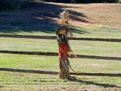 Great weather in Newbury today says Mrs. scarecrow