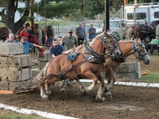 Horse Pulling at The Deerfield Fair today