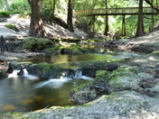 Suwannee River Spring
