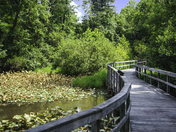 Boardwalk to the Trees