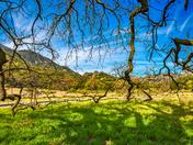Great Oak Tree