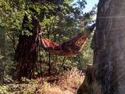 Camp Days