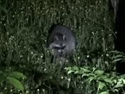 Wildlife at Allegany State Park