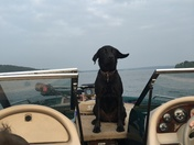 Magic the Boat Dog