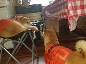 camping fun for the doggies
