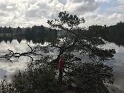 Reflections at Woahink Lake