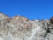 Big Horn Sheep - Palm Desert, CA