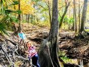 Wondering in the woods
