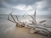Driftwood Beach, Big Talbot Island