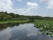 Blue Springs River Tour