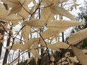 April Leaves