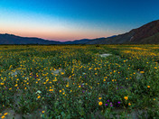 Super Bloom - Anza Borrego State Park