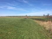 A Walk at Monmouth Battlefield