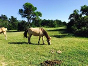Wild Horses Couldnt Drag Me Away from this Spot