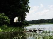 A Swan's Flight