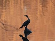 Mirror Image on the Lake