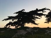 Beach trees at sunset