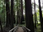 Mystical bridge