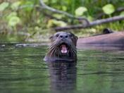 Kayak Greeting Otter