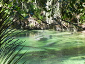 Missing the Manatees