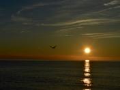 Seagull in the Sun Beams