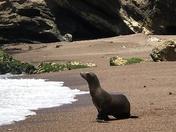 Seal At Play