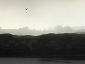 Seagull at Dusk