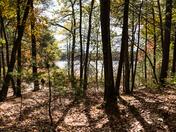 Walden Pond Trail