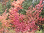 The foliage in New Hampshire