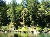 California's beautiful Redwoods