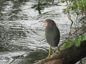 Lake birdie