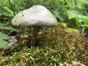 Mushroom at Pinckney Rec #7