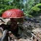 Fort Custer Mushroom #3