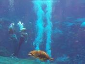 Turtles and Mermaids