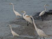 Full of Egrets