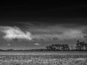 Kilpatrick Prairie
