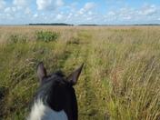 prairie thru ponies ears