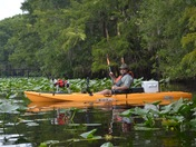Kayaking In A Sea Of Lily Pads