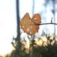 Love Leaf