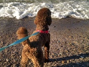 The beach on a brisk day!