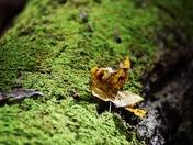 Nature's Velvet