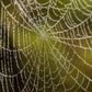 Morning Dew on The Spider's Home
