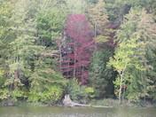 Lake and trees (fall colors)